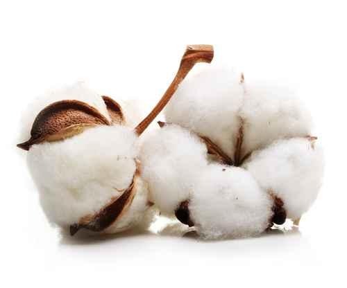 GVO-Analytik von textilen Fertigprodukten erstmals möglich